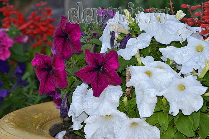 уличные цветы/4348076_11gorodskiecveti (700x466, 100Kb)