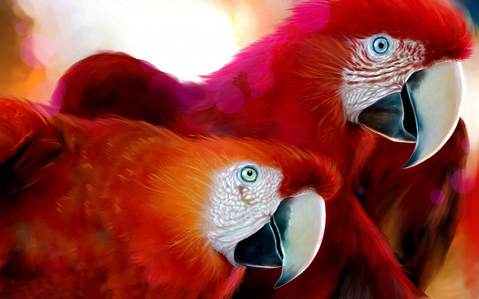 parrots_widescreen-2560x1600 (700x437, 326Kb)