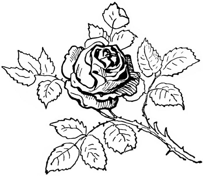 Роза чёрно белая рисунок