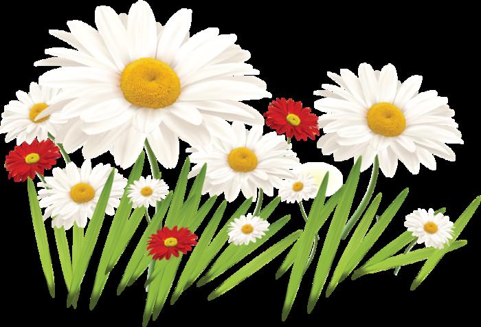 Картинки полевые цветы нарисованные 1