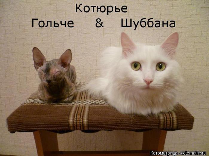 kotomatritsa_e (700x524, 48Kb)