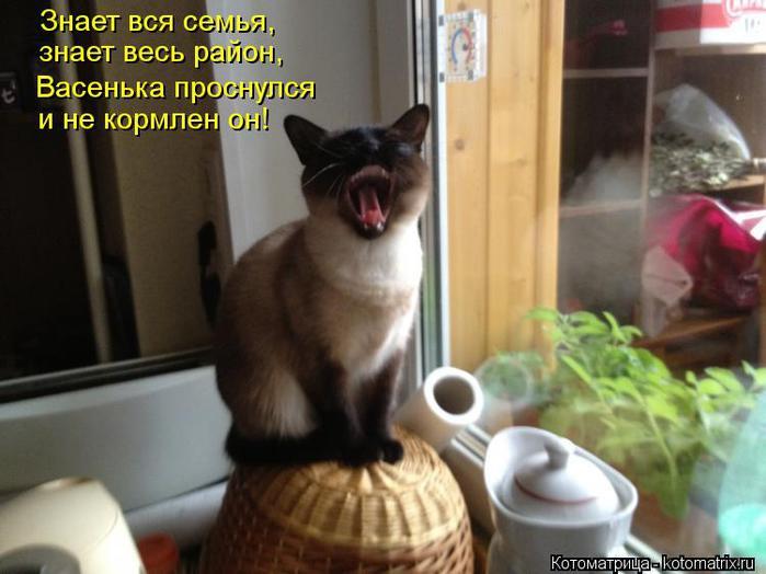 kotomatritsa_lC (700x524, 46Kb)