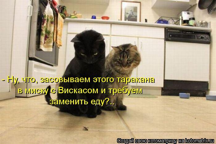 kotomatritsa_nw (700x468, 53Kb)