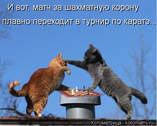 kotomatritsa_Qk (501x404, 38Kb)