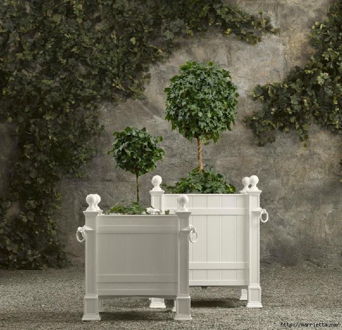 Плющ (Хедера хеликс). Потрясающие композиции для украшения дома и сада (60) (700x674, 321Kb)