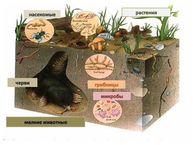 происхождения в почве,