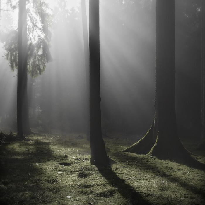 Харьзба в лесу 7 фотография