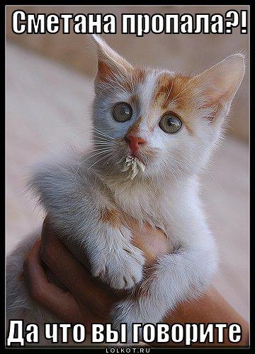 Сметана и коты фото