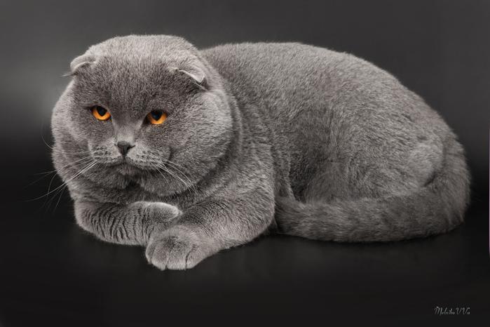 Дневник кота (700x466, 192Kb)