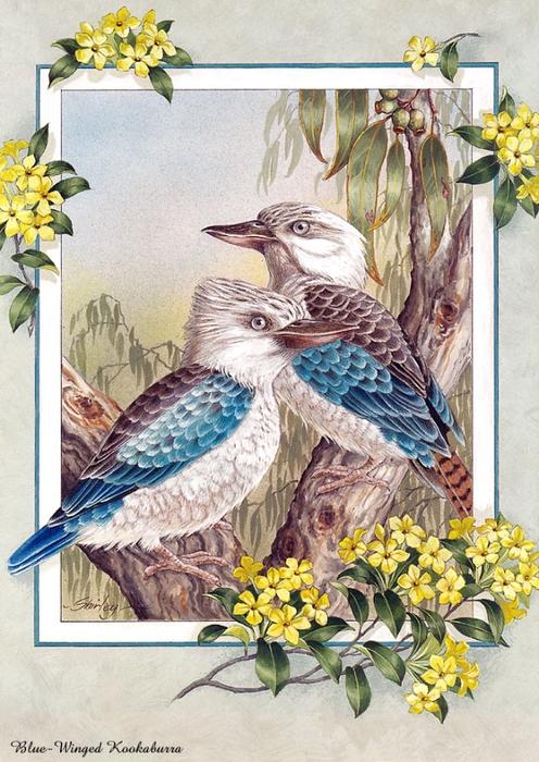p-Australian_Birds_Cal2003_10 (496x700, 326KB)