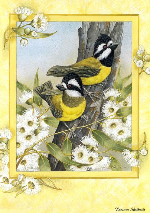 p-Australian_Birds_Cal2003_11 (496x700, 327KB)