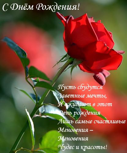 День Рождения-Роза!!! (415x500, 218Kb)