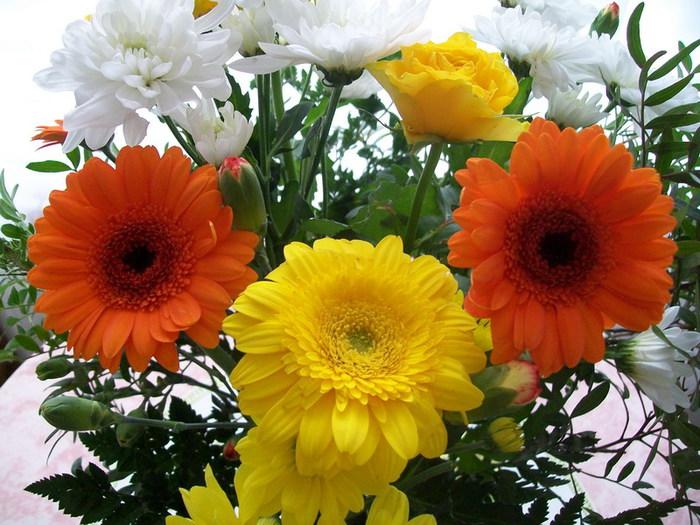Güzel çiçekler kokulu mis gibi çiçekler çiçek resimleri