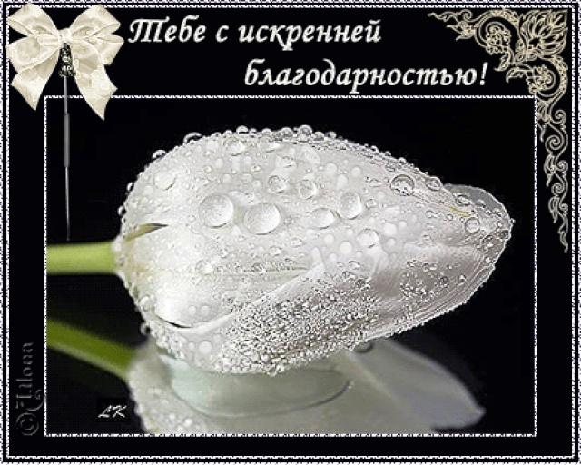 http://img1.liveinternet.ru/images/attach/c/8/100/586/100586175_ipMQ8HP2Ru.jpg