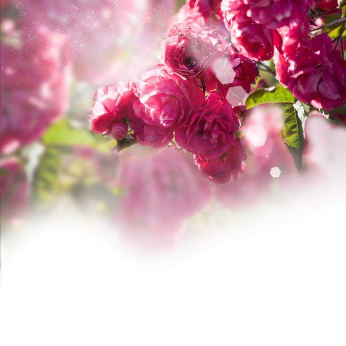 клипарт цветок на прозрачном фоне: