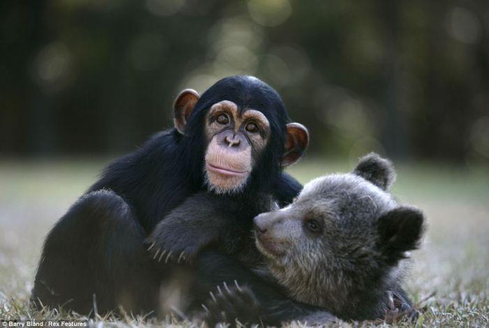 дружба животных фото 3 (700x470, 33Kb)
