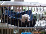 Гамак для крысы своими руками. Обсуждение на LiveInternet - Российский Сервис Онлайн-Дневников