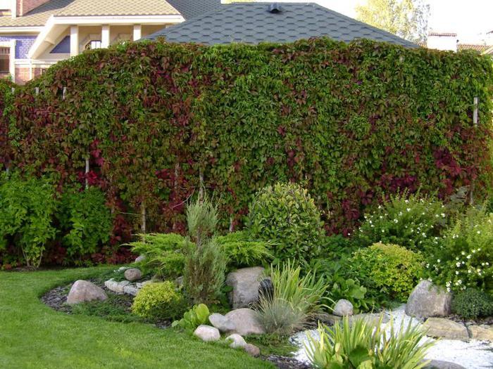 Создавать в своем саду зеленую