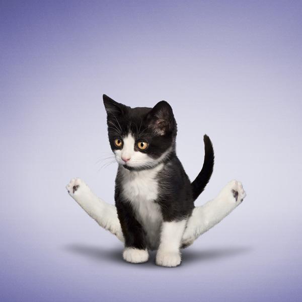 забавные кошки, смешные фотографии кошек, кошки йога