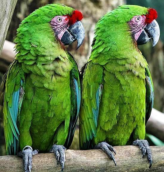 зеленый (550x578, 89Kb)