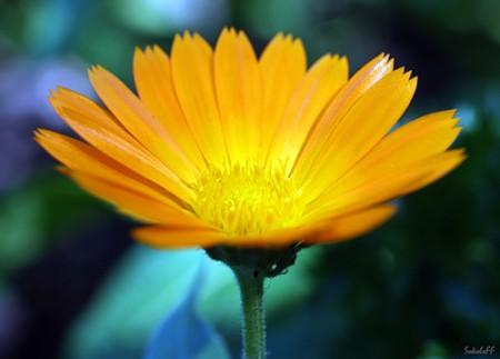 солнечно-оранжевый (450x323, 27Kb)