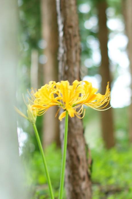 цветывау2 (463x700, 50Kb)