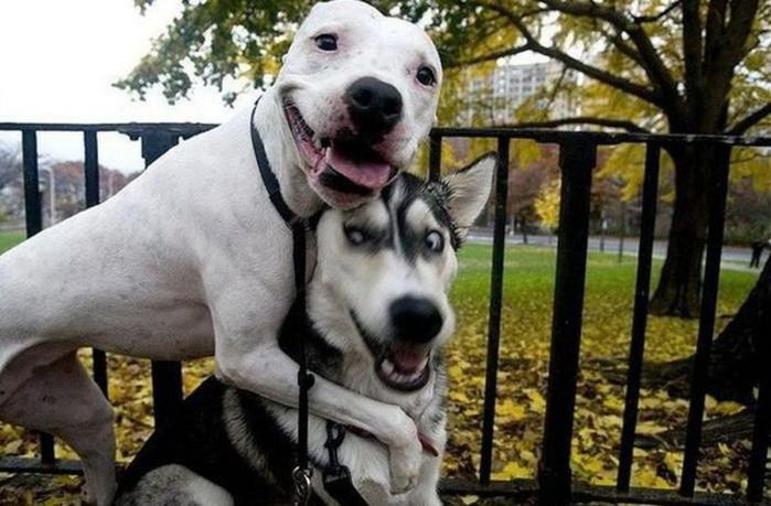 Статусы к фото с собаками