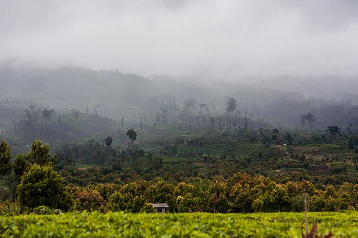 индонезия фото 12 (700x466, 174Kb)
