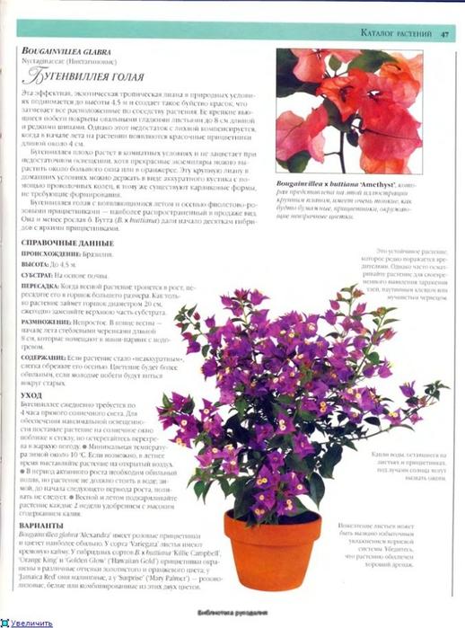 комнатные растения (5) (518x700, 233Kb)