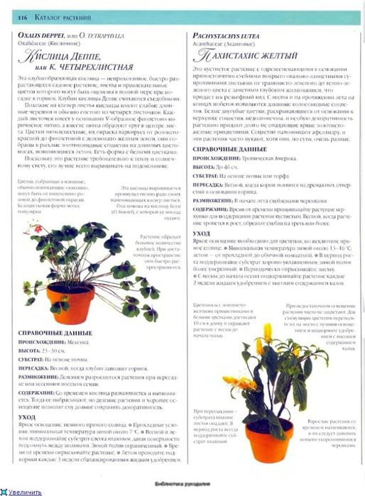комнатные растения (8) (514x700, 231Kb)