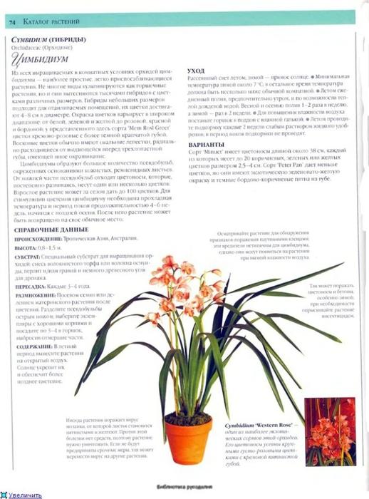 комнатные растения (10) (518x700, 214Kb)