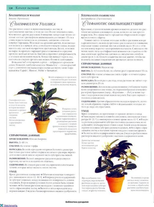 комнатные растения (13) (521x700, 238Kb)