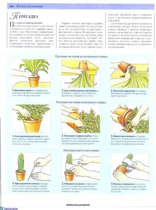 комнатные растения (16) (519x700, 240Kb)
