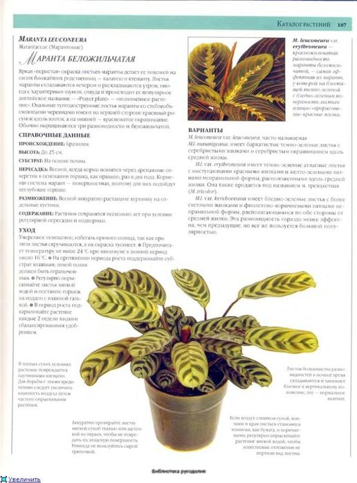комнатные растения (21) (516x700, 220Kb)