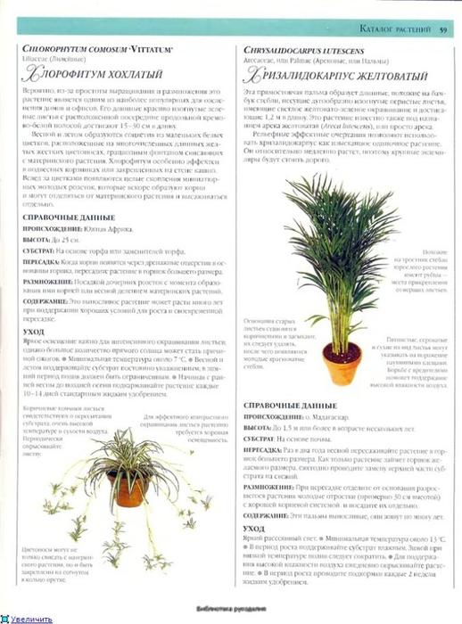 комнатные растения (24) (518x700, 210Kb)