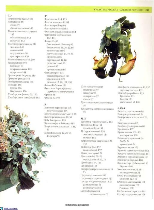 комнатные растения (26) (515x700, 193Kb)