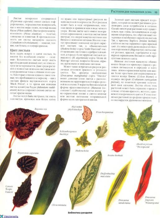 комнатные растения (33) (515x700, 239Kb)