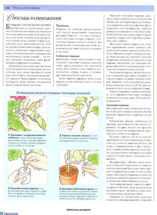 комнатные растения (36) (511x700, 247Kb)