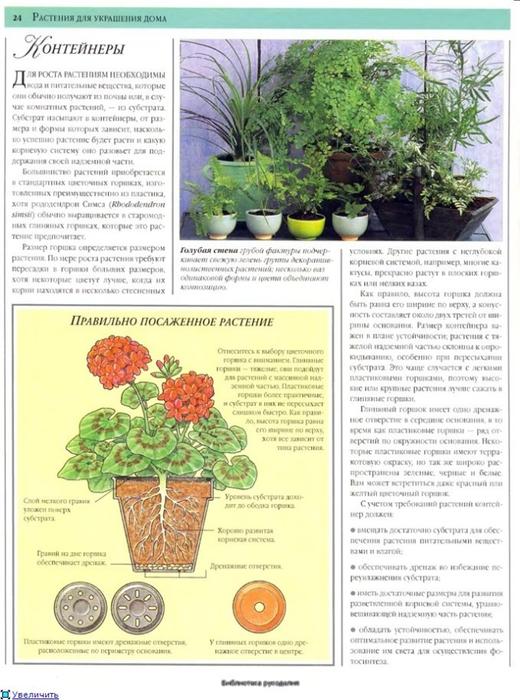 комнатные растения (39) (520x700, 266Kb)
