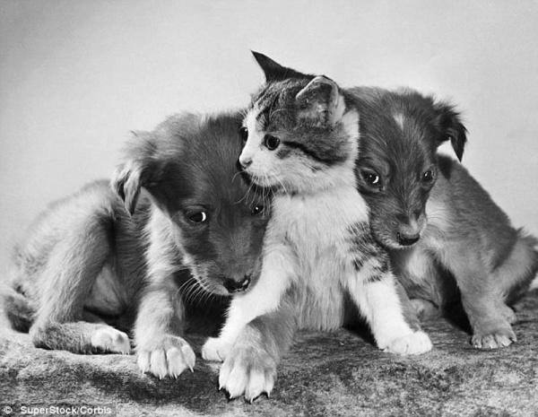 смешные кошки ретро фотографии (600x465, 103Kb)
