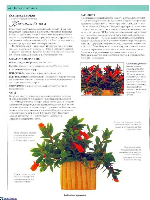 комнатные растения (41) (523x700, 222Kb)