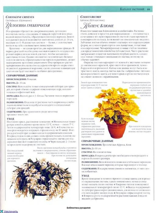 комнатные растения (44) (516x700, 246Kb)