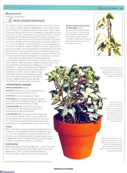 комнатные растения (45) (514x700, 230Kb)