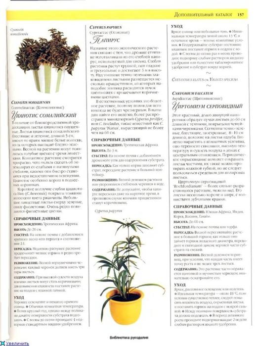 комнатные растения (46) (522x700, 236Kb)