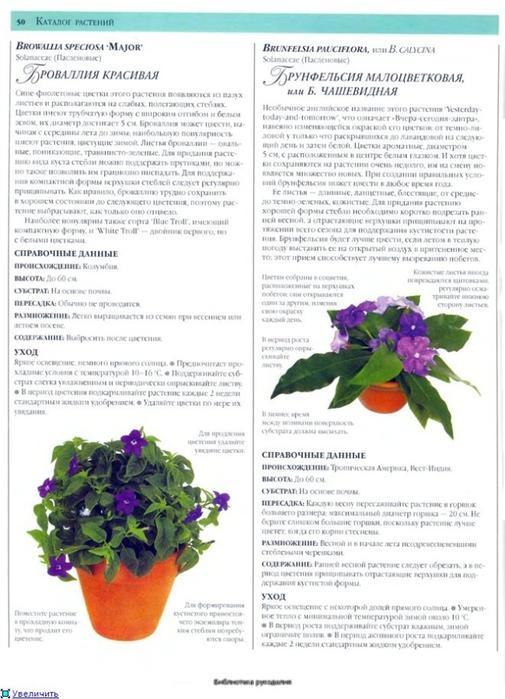 комнатные растения (48) (505x700, 230Kb)