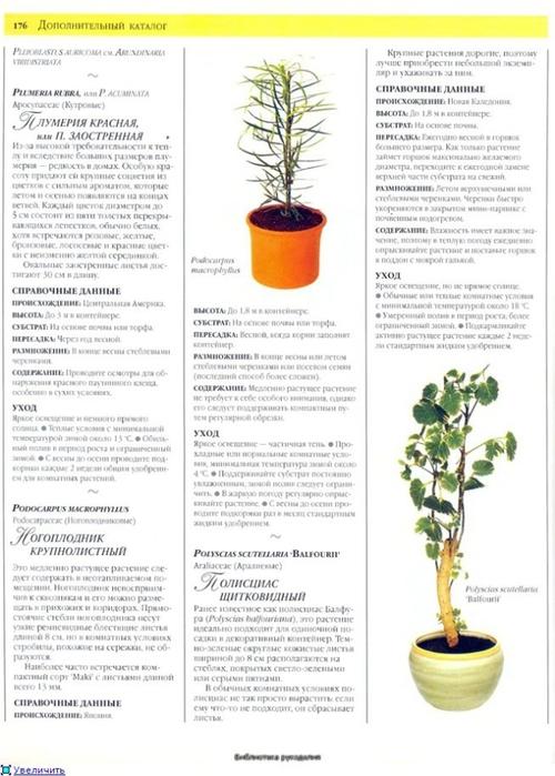 комнатные растения (49) (500x700, 211Kb)