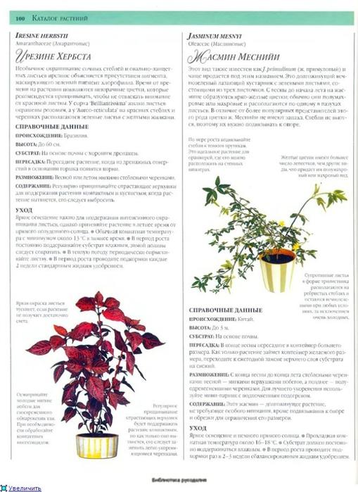 комнатные растения (51) (509x700, 218Kb)
