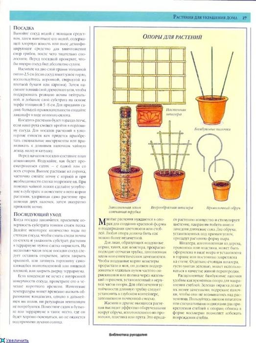 комнатные растения (53) (523x700, 259Kb)