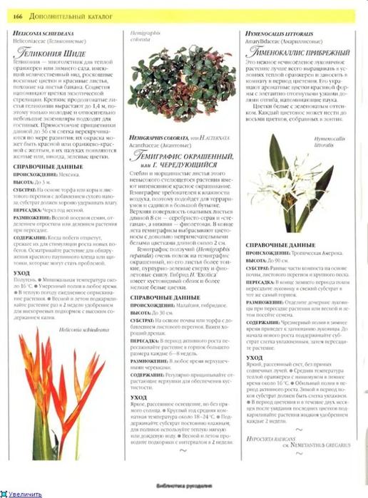 комнатные растения (57) (516x700, 218Kb)