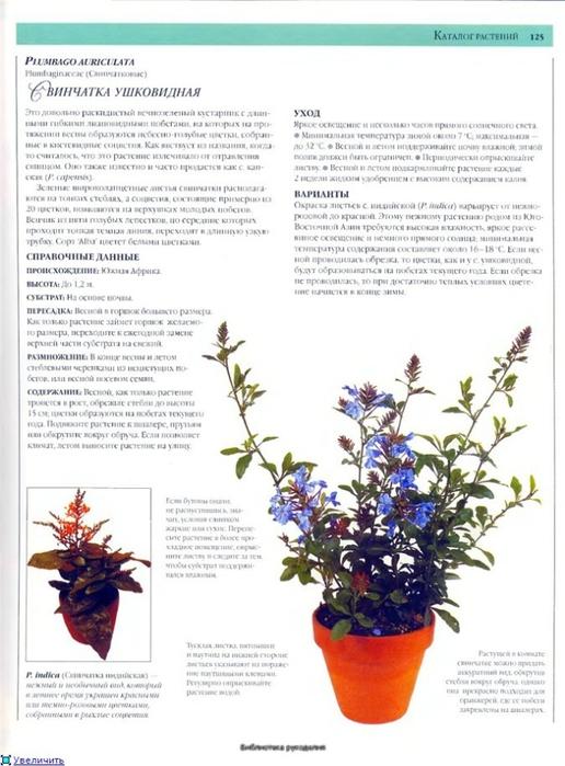 комнатные растения (59) (516x700, 219Kb)